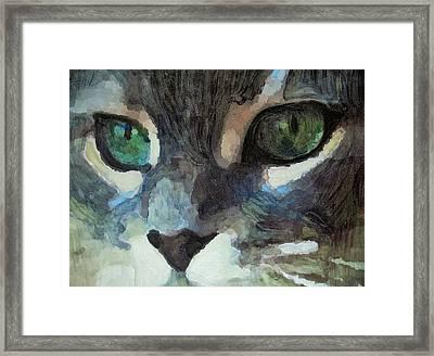 Gray Cat Framed Print by G Stewart