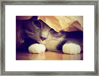 Gray Cat In Bag Framed Print by Weatherbee.arloartists.com