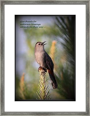 Gray Catbird - Indian Saying - Give Thanks... Framed Print