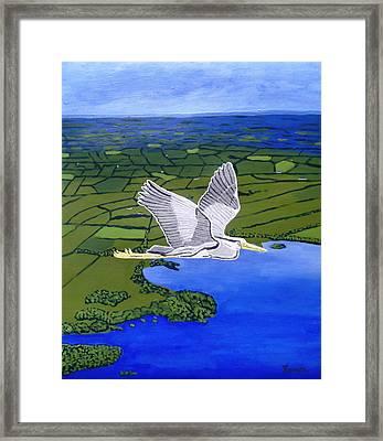 Gray Heron Flying Over Lough Sheelin Framed Print