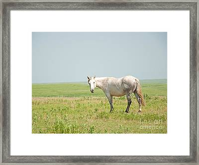 Gray On Prairie Framed Print