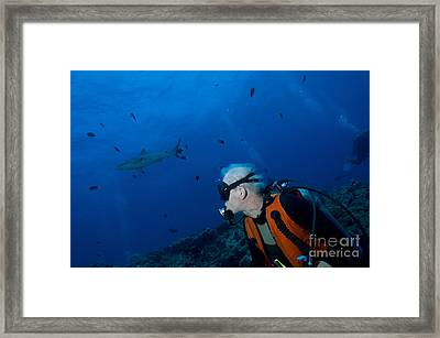 Gray Reef Shark With Diver, Papua New Framed Print by Steve Jones