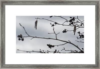 Gray Sky Silhouette Framed Print