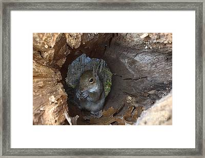 Gray Squirrel Framed Print