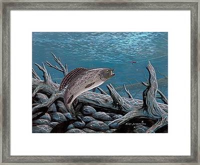 Grayling Framed Print by Kurt Jacobson