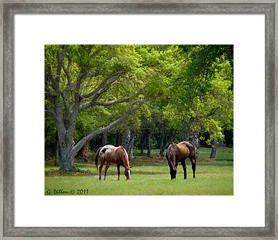 Grazing Pair Of Horses Framed Print