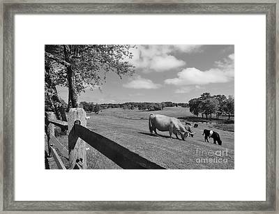 Grazing The Day Away Framed Print by Catherine Reusch Daley
