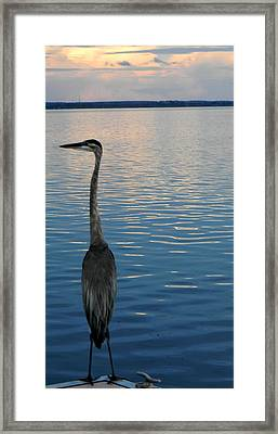 Great Blue Dusk Framed Print by Christy Usilton