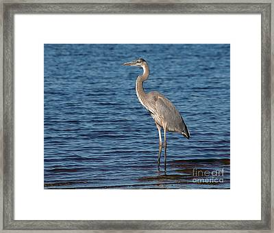 Framed Print featuring the photograph Great Blue Heron by Art Whitton