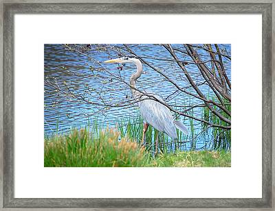 Framed Print featuring the photograph Great Blue Heron At Pond's Edge by Mary McAvoy