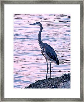 Framed Print featuring the photograph Great Blue Heron by Brian Wright
