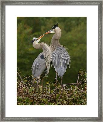 Framed Print featuring the photograph Great Blue Heron Couple by Myrna Bradshaw