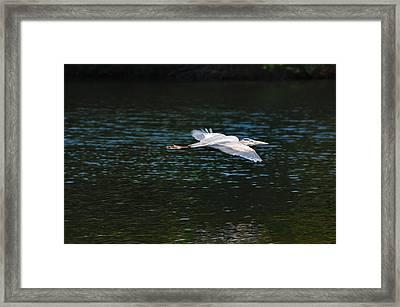 Great Blue Heron Illuminated Framed Print