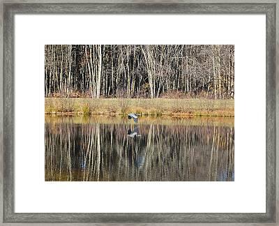 Great Blue Heron In November Framed Print