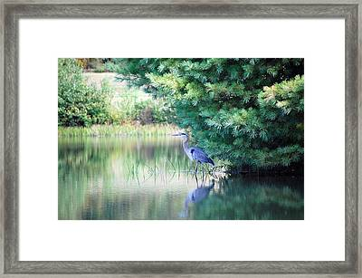 Framed Print featuring the photograph Great Blue Heron In Pines by Mary McAvoy