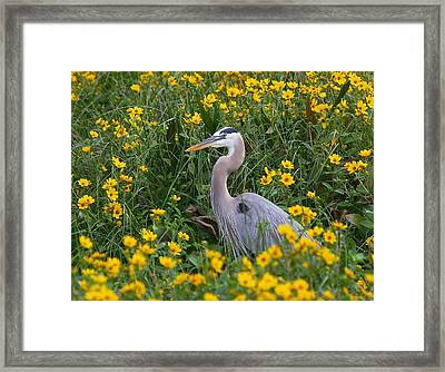 Framed Print featuring the photograph Great Blue Heron In The Flowers by Myrna Bradshaw