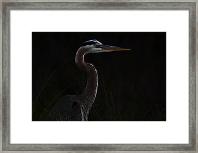 Great Blue Heron In The Sea Oats Framed Print