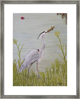 Great Blue Heron Framed Print by Jim Ziemer
