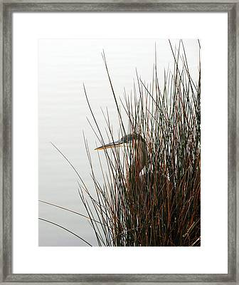 Great Blue Heron Framed Print by Kay Lovingood