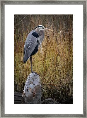 Great Blue Heron On Spool Framed Print by Debra and Dave Vanderlaan
