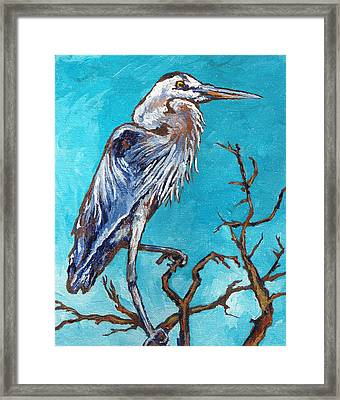Great Blue Heron Framed Print by Sandy Tracey