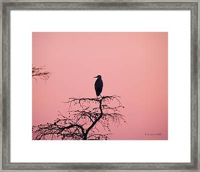 Great Blue Heron Silhouette Framed Print