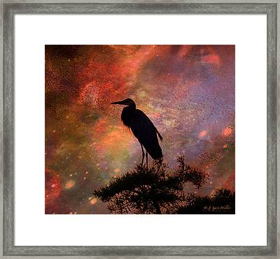 Great Blue Heron Viewing The Cosmos Framed Print