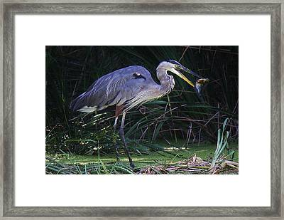 Great Blue Heron With The Catch Of The Day Framed Print by Paulette Thomas