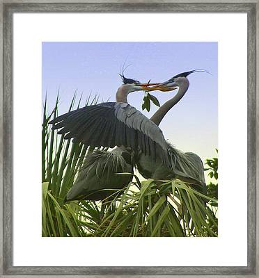 Framed Print featuring the photograph Great Blue Herons by Myrna Bradshaw