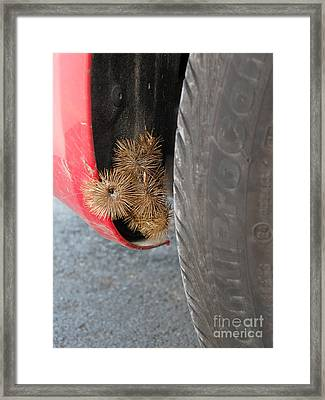 Great Burdock Framed Print by Ted Kinsman