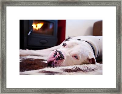 Great Dane Dog Sleeping By Fire Framed Print by Sharon Vos-Arnold