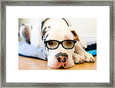 Great Dane Dog, Sunglasses, Laying Low Framed Print by Sharon Vos-Arnold