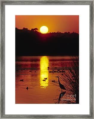 Framed Print featuring the photograph Great Egret - Santa Barbara Bird Refuge by Craig Lovell