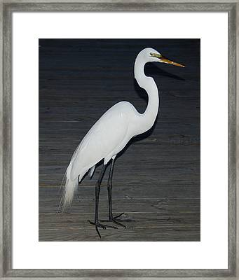 Snowy Egret Framed Print by Aimee L Maher Photography and Art Visit ALMGallerydotcom