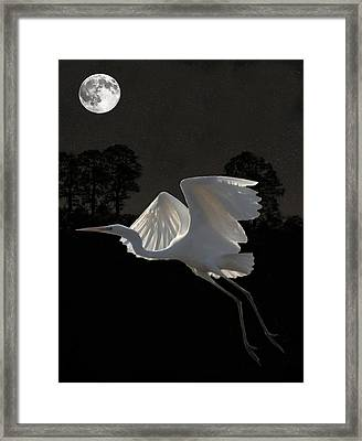 Great Egret In Flight Framed Print by Eric Kempson