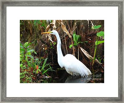 Great Egret Framed Print by Juergen Roth