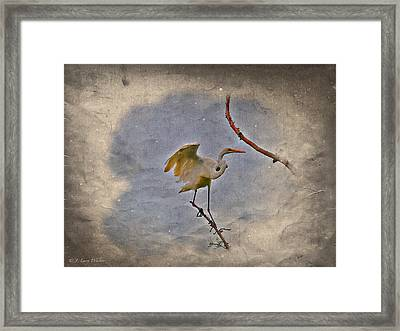 Great Egret Landing Framed Print by J Larry Walker