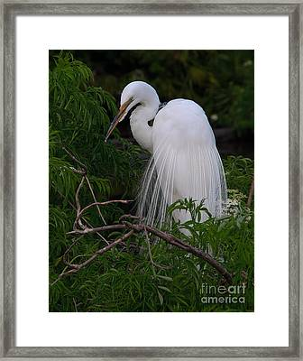 Framed Print featuring the photograph Great Egret Nesting by Art Whitton