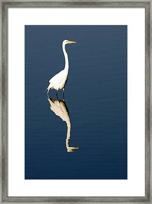 Great Egret Reflected Framed Print by Sally Weigand