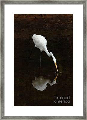 Great Egret Reflection Framed Print by Bob Christopher