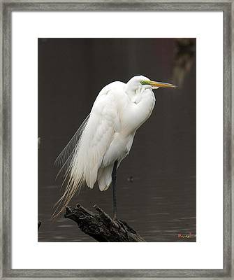 Framed Print featuring the photograph Great Egret Resting Dmsb0036 by Gerry Gantt