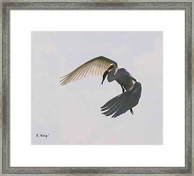 Great Egret Successful Fishing Framed Print