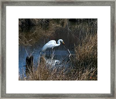 Framed Print featuring the photograph Great Egret With Fish Dmsb0034 by Gerry Gantt