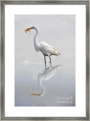 Framed Print featuring the photograph Great Egret With Lunch by Dan Friend