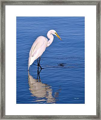 Great Egret With Shrimp Framed Print