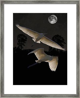 Great Egrets In Flight Framed Print by Eric Kempson