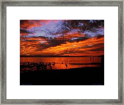 Great Heron Sunset Framed Print