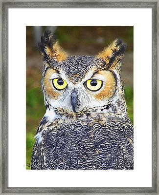Great Horned Owl Framed Print by Barbara Middleton