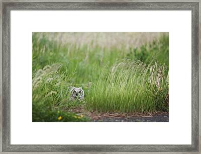 Great Horned Owl Bubo Virginianus Framed Print by Susan Dykstra