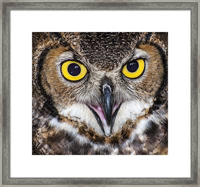 Great Horned Owl Close Up Framed Print by Ray Downs